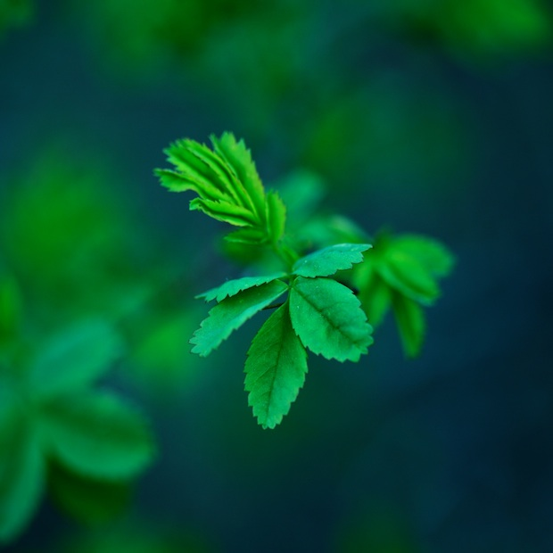 Spring leaves wallpaper