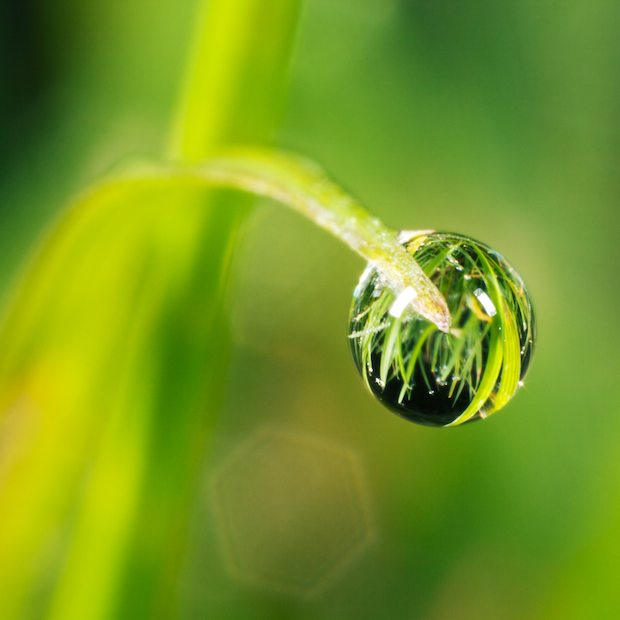 Water grass wallpaper
